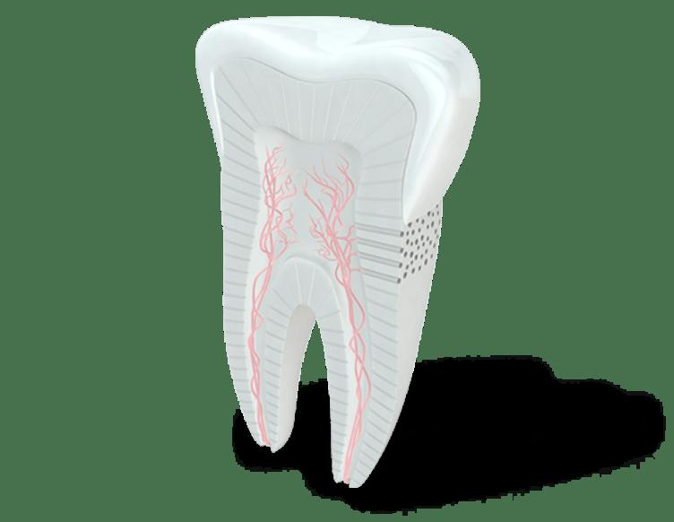 Nerves in teeth