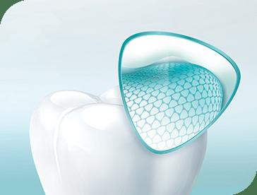 Om je tandglazuur te beschermen is het goed om te weten hoe je tanden in elkaar zitten.
