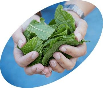 Zelené listy v dlaních