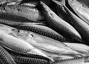 魚肝油的好處, 魚油的好處